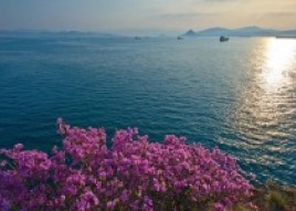Hanami in Primorye: Why to visit Vladivostok when the trees are in blossom
